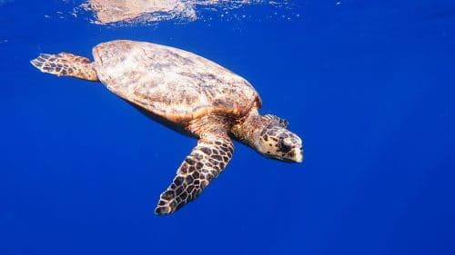 Cute Green Sea Turtle